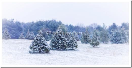 2010 Dec 13-8 copy