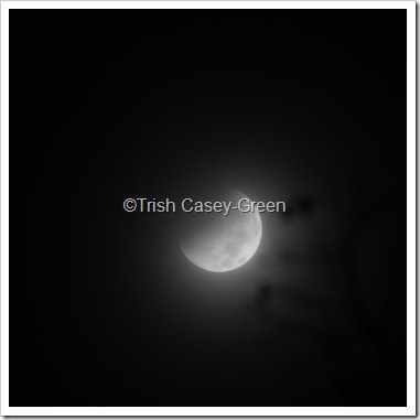 2010 December Moon (22 of 7)