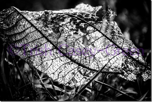 20131106-untitled-77